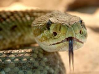 Президент Либерии не смог попасть в свой рабочий кабинет из-за змей
