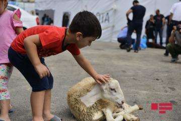 В Баку отмечают праздник Гурбан байрамы
