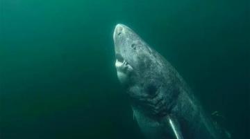 Ученые нашли 500-летнюю акулу