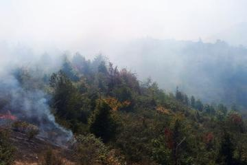 Fire breaks out in Hirkan National Park - [color=red]UPDATED[/color]
