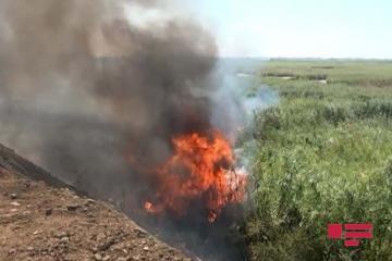 """Şirvanda """"Bağ Evləri"""" massivinin ətrafında 4 hektara qədər ərazi yanıb - [color=red]FOTO[/color]"""