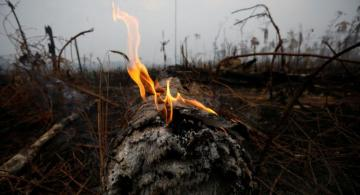 Tusk: EU states may hesitate to ratify EU-Mercosur deal if Brazil ignores rainforest fires