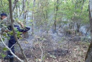 МЧС: Предотвращено распространение пожаров в Огузе, Габале, Агсу, Исмаиллы - [color=red]ВИДЕО[/color]