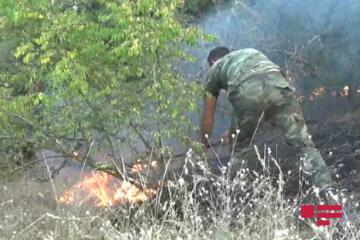 Forest fires, broke out in Azerbaijan regions, completely extinguished