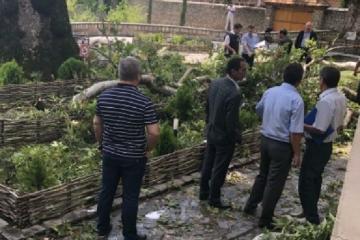 Скончалась одна из пострадавших при падении ветки дерева в Шеки