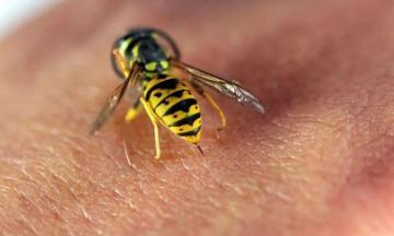 Bee sting kills man in Azerbaijan