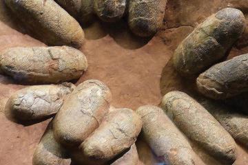 Çində 9 yaşlı uşaq 66 mln. il yaşı olan 11 dinozavr yumurtası tapıb