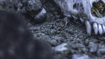 Canadian miners unearth 70-million-year old sea monster