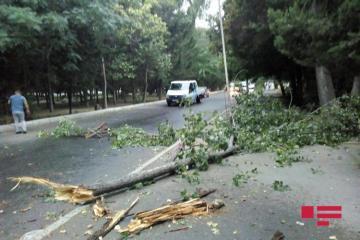 Сильный ветер привел к последствиям в Мингячевире