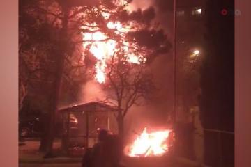 Bakıda bayram tonqalı ağacları yandırıb - [color=red]VİDEO[/color]