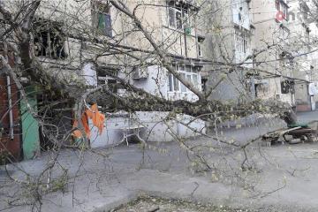 Mingəçevirdə ağac binanın üzərinə aşıb
