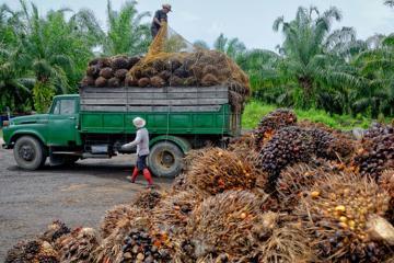 Индонезия намерена подать иск в ВТО против ЕС