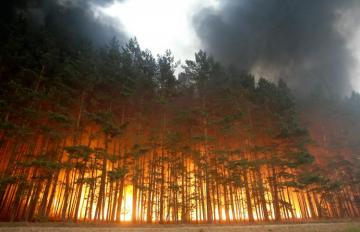 Wildfires scorch over 44,000 hectares across Russia