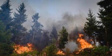 Gürcüstanda meşə yanğını baş verib