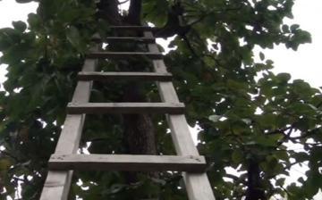 Mingəçevirdə yaşlı kişi tut ağacından yıxılıb