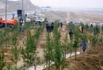 В Баку и на Абшероне будут озеленены 7 тысяч гектаров