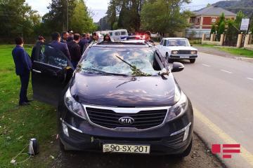 В Лянкяране дерево упало на автомобиль, пострадал водитель  - [color=red]ФОТО[/color]