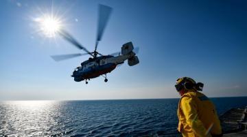 Во время учений НАТО в Балтике погибли морские свиньи