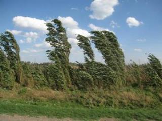 МЭПР: Сильный ветер стихнет к утру завтрашнего дня