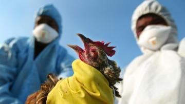 Пройдут мониторинги в связи с птичьим гриппом