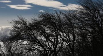 Sabahın hava proqnozu: Güclü külək əsəcək