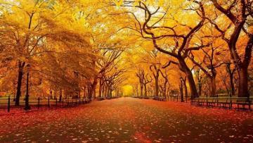 Обнародован прогноз погоды на октябрь