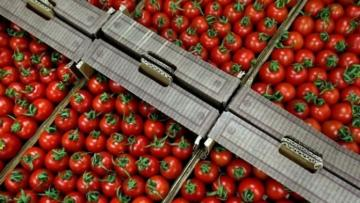 Rusiya Azərbaycandan pomidor idxalına icazə verib