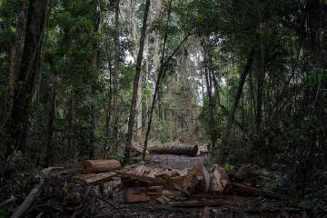 Braziliyanın tropik meşələri karbon qazını udmaq əvəzinə, xaric etməyə başlayıblar