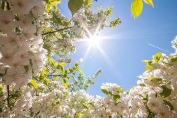 Meteorological arrival time of spring in Azerbaijan and dates of Chershenbes of Novruz disclosed
