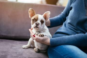 TƏBİB: Домашние животные не являются носителями коронавируса