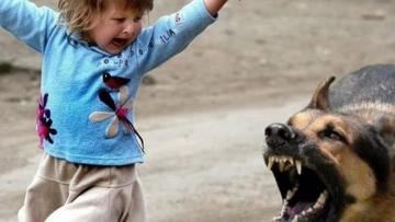 В Шеки собака покусала 4 детей