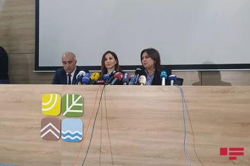 "Umayra Taghieva: ""Height of the waves on Oil Rocks reached 3.2 m"""