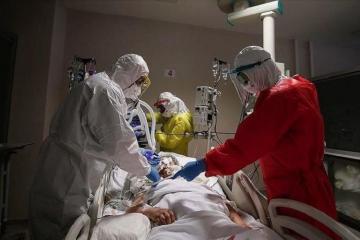 Число случаев заражения COVID-19 в мире превысило 11 миллионов