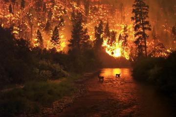 ABŞ-ın qərbindəki meşə yanğınları zamanı ölənlərin sayı 33-ə çatıb