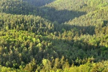 Protection of forests may be entrusted to the security police or private organizations in Azerbaijan