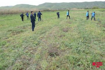 """""""Yaşıl Marafon"""" çərçivəsində Qubadlıda 750 ağac əkilib"""