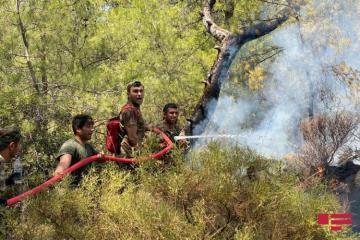 Азербайджанские пожарные в зоне пожаров в Турции – [color=red]ФОТО с места происшествия[/color]