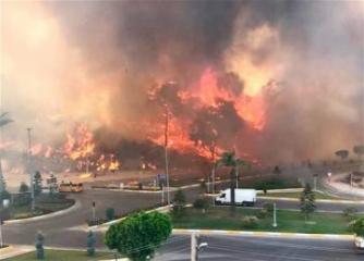 Число жертв при лесных пожарах в Турции возросло до восьми