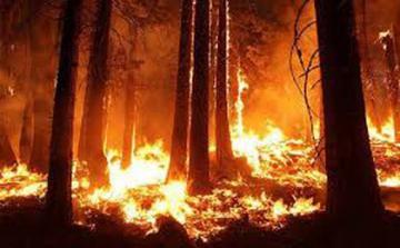 Бекир Пакдемирли: Пожары продолжаются в 8 регионах Турции