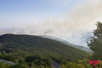 Пожар, возникший в лесном массиве в Лянкяране, потушен - [color=red]ОБНОВЛЕНО[/color]