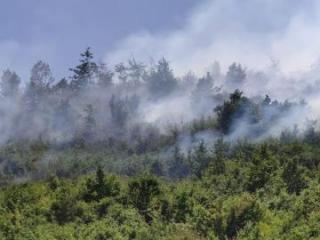МЭПР: Затруднено привлечение техники для тушения пожара в Гирканском парке