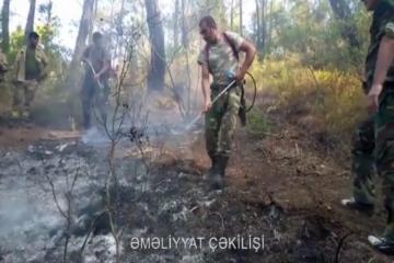 Силы МЧС Азербайджана продолжают тушение пожаров в Турции - [color=red]ВИДЕО[/color]