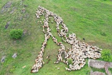 Завершен перенос на пастбища Кяльбаджара овцеводческих и пчеловодческих хозяйств