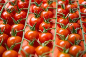 Azərbaycanın daha 8 müəssisədən Rusiyaya pomidor ixracına icazə verilib