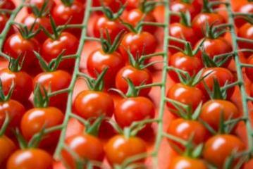 Еще 8 предприятий Азербайджана получили разрешение на экспорт помидоров в Россию
