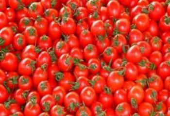 Россия разрешила ввоз помидоров еще 30 предприятиям Азербайджана